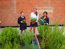 SUA's Nutrition Club built, planted and cares for and herb garden at school