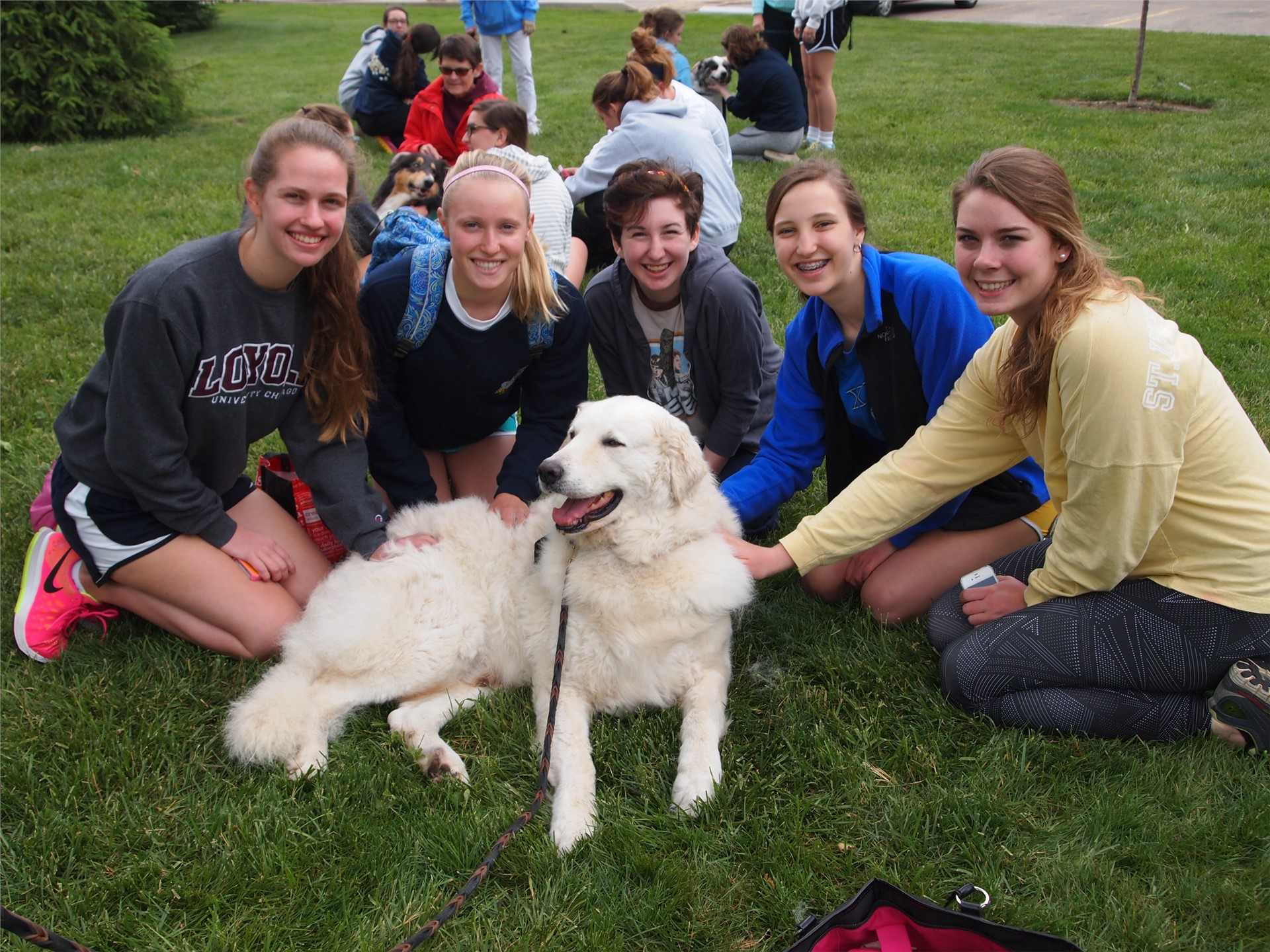 Students took a break between final exams to pet a furry friend